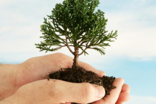 Celebrate Arbor Day with your Kids!